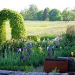 A modern country garden embedded in a landscape with wildflower meadows. A corten steel water basin and a clipped hornbeam arch. Plants include Fagus sylvatica, Iris germanica and Paeonia suffruticosa 'Kouka Mon'
