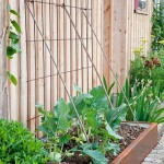 Close to the wooden front of a house, corten steel troughs contain vegetables including kohlrabi