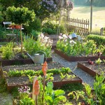 Modern kitchen garden with antique elements. Beds edged in corten steel, low clipped box hedge, a wrought iron fence, a small rest area with a wooden chair and a bistro table and a tin watering can. Plants are vegetables, salad , Ampfer 'Blood Veined', Buxus, Dianthus carthusianorum, Syringa vulgaris, Tulipa and Viola