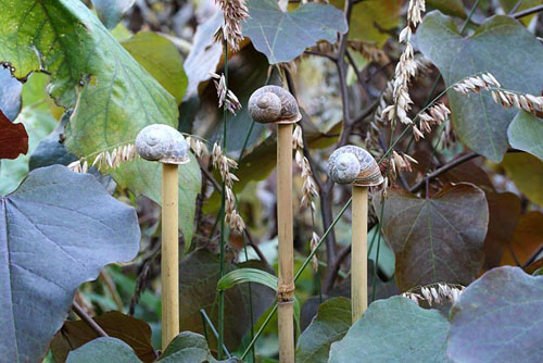 Step by step of making snail shell cane toppers - The finished cane toppers used decoratively with Cercis canadensis 'Forest Pansy' and ornamental grass