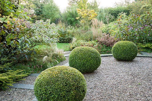 Clipped box in the topiary garden with shrubs - Windy Ridge - © Carole Drake/GAP Photos