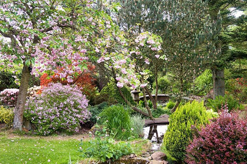 Cherry tree in blossom over which arches the pond in the Japanese garden at Cloud cottage - © Lee Avison/GAP Photos