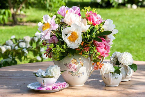 Peonies and Viburnum arranged together with lady's mantle and honeysuckle in an antique tea set - © Christa Brand/GAP Photos