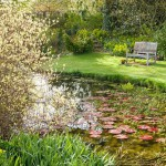 The Top Pond with a wooden bench overlooking the pond. Cornus alba 'Elegantissima' - red-barked dogwood 'Elegantissima', on the left. Goltho Gardens, Goltho, Lincolnshire, UK. Spring, May 2015.