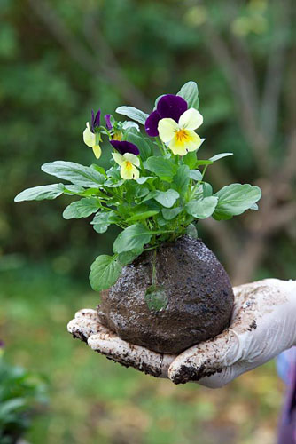 Making kokedama - The compost has been formed into a sphere that holds together - © FhF Greenmedia/GAP Photos