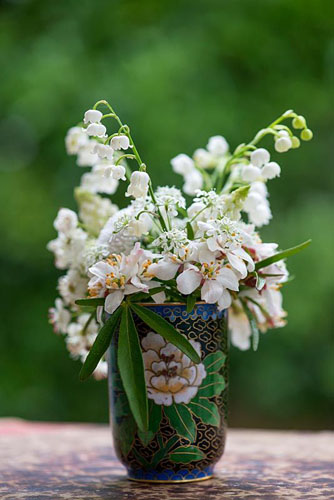 All white posie step by step in May: Mexican orange blossom, Bellis daisy, cow parsley, white grape hyacinths, hawthorn and lily-of-the-valley. Choisya 'Aztec Pearl', Bellis perennis, Anthriscus sylvestris, Muscari aucheri 'White Magic' , Crataegus laevigata and Convallaria majalis. Arranged in junk shop find - © Nicola Stocken/GAP Photos