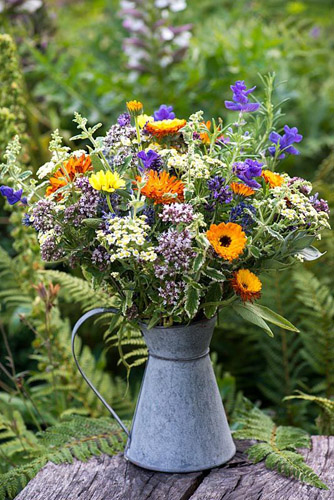 Galvanised jug filled with arrangement of herbal plants - feverfew, marigold, clary sage, oregano, mint, rosemary, lavender - © Nicola Stocken/GAP Photos