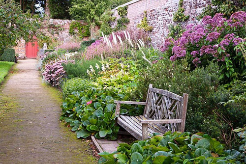 Wooden bench and Bergenia - Parham, West Sussex - © Abigail Rex/GAP Photos