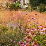 Contemporary garden in late summer with grasses and perennials. Stipa gigantea, Echinacea and Perovskia 'Blue Spire'. Bay Tree House garden, Hampshire