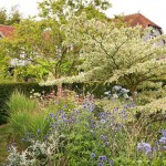 Variegated Cornus, Agapanthus, Perovskia 'Blue Spire' and Sedum. Bay Tree House garden, Hampshire