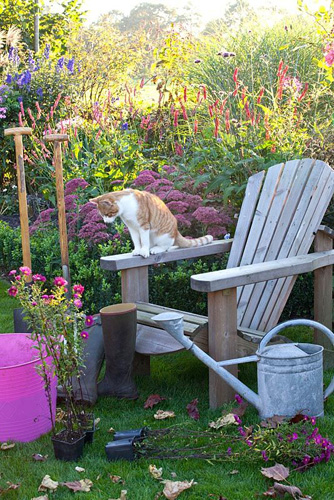 Pet cat sitting on wooden chair