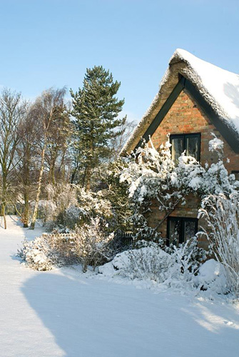 Snow covered Thatched and brick cottage, border includes Spiraea, Potentilla and the grass Miscanthus sinensis 'Silberfeder.' Rosa 'Madame Alfred Carriere' growing on the cottage. Trees in the distance include Betula - Silver Birch. Gowan Cottage - © Zara Napier/GAP Photos