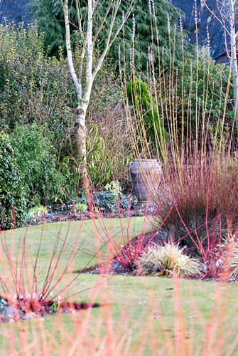 Winter borders with Cornus sanguinea 'Winter Beauty' - Dogwood at Richard Ayres' Garden, Lode, Cambridgeshire - © Zara Napier/GAP Photos