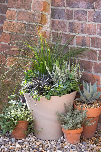 Step by step winter container with Carex, Calluna vulgaris 'Alicia' and Ophiopogon planiscapus 'Niger' - © GAP Photos