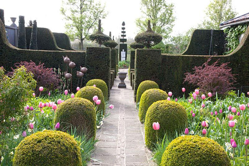 Formal garden with Tulipa 'Pink Impression', Tulipa 'Pink Diamond', Tulipa 'Rosalie', Tulipa 'Violet Beauty' and Narcissus 'Bellsong' - © Elke Borkowski/GAP Photos