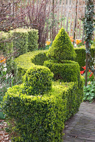 Topiary in garden shaped from Buxus sempervirens - © Elke Borkowski/GAP Photos