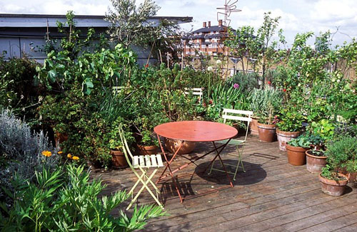 Rose Gray's Rooftop Garden - © Sarah Cuttle/GAP Photos