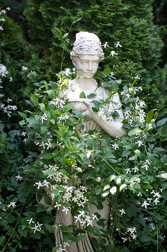 Garden sculpture covered by Clematis chinensis - © Joanna Kossak/GAP Photos