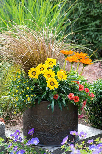 Copper pot with hot coloured plants: Calibrachoa 'Million Bells Crackling Fire', French marigolds, Sanvitalia procumbens, Gazania 'Gazoo Orange', Gazania 'Gazoo Clear Yellow' and Carex comans 'Milk Chocolate' - © Nicola Stocken/GAP Photos