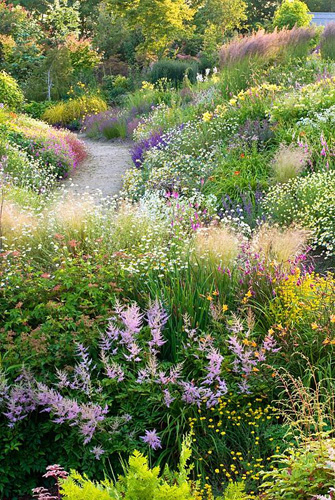 Informal country garden in July with grasses and perennials including Astilbe, Hosta, Rodgersia, Filipendula, Campanula, Astrantia, Anthemis, Hemerocallis, Salvia, Lychnis, Linaria, Dierema, Geranium, Heuchera, Stipa tenuissima, Calamagrostis x acutiflora 'Karl Foerster' - Wildside garden - © Richard Bloom/GAP Photos