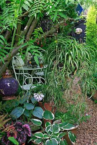 Hostas and Begonia rex in pots and a suspended spider plant alongside a gravel path that leads to a shady seating area with white wirework furniture - © Graham Strong/GAP Photos