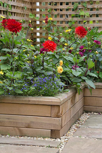 Overview of the Dahlia borders planted in raised beds constructed from WoodBlocX. Dahlia 'Garden Wonder', Thunbergia alata - © GAP Photos