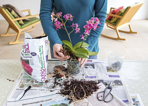 Adding Orchid potting mix - © GAP Photos
