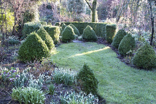Box cones and hedging in winter garden at Weeping Ash, Cheshire, February - © GAP Photos/Fiona Lea