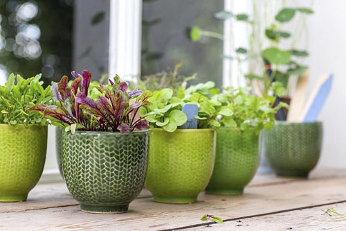 Miniature pots with microgreen on windsill - © GAP Photos