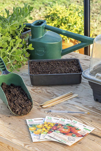 Tools and materials for sowing Tomato seed -  © GAP Photos