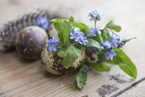 Myosotis planted in quail eggs, accompanied with feathers
