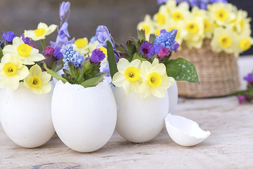 White duck egg shells planted with Narcissus 'Minnow', Muscari, Pulmonaria and Bluebell