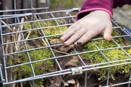Child adding woodlouse into insect hotel - © GAP Photos