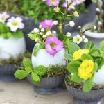 Easter arrangement - spring flowers in egg shells