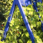 Colourful wooden support for runner beans in vegetable garden. Bean Frame Support