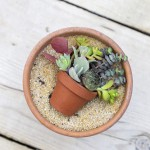 Miniature succulent pot in a pot - paint a picture with plants