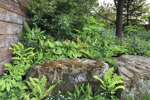 Ferns planted around rocks in The Resilience Garden at RHS Chelsea Flower Show 2019. Designer:  Sarah Eberle - Sponsor: The Forestry Commission. Gold medal - © GAP Photos/Annie Green-Armytage