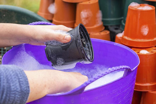 Person washing dirty plastic plant pots in soapy water - © GAP Photos