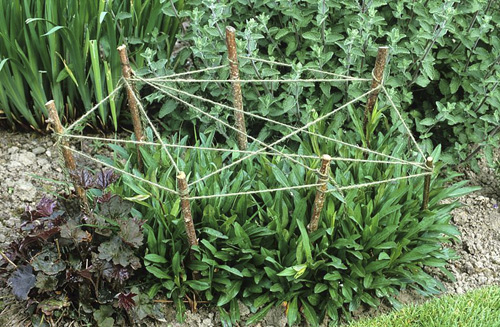 Staking perennial plants with cat's cradle of string and sticks - © GAP Photos/Jonathan Buckley
