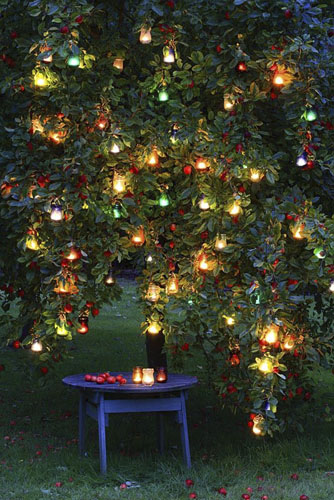 Glass lanterns hanging in an apple tree at night with rustic table beneath - © GAP Photos/Maxine Adcock