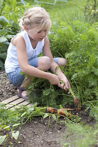 Young girl pulling carrots - © GAP Photos/Friedrich Strauss