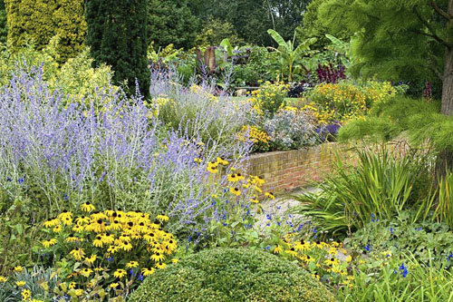 Late summer August border with Perovskia and Rudbeckia