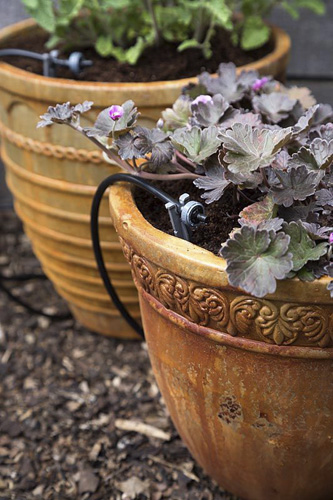 Irrigation drip system installed in rustic pots - © GAP Photos