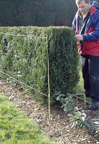 Hedge trimming. If you find it hard to cut hedges, put up two canes to the desired shape. Attach two lines between them to act as guidelines - © GAP Photos/Mark Winwood