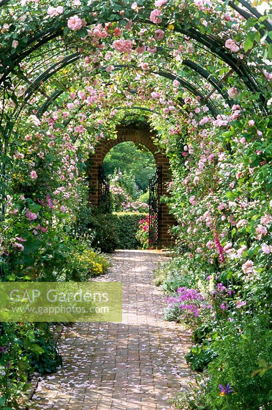 Gap Gardens View Through Rose Covered Pergola With Rosa