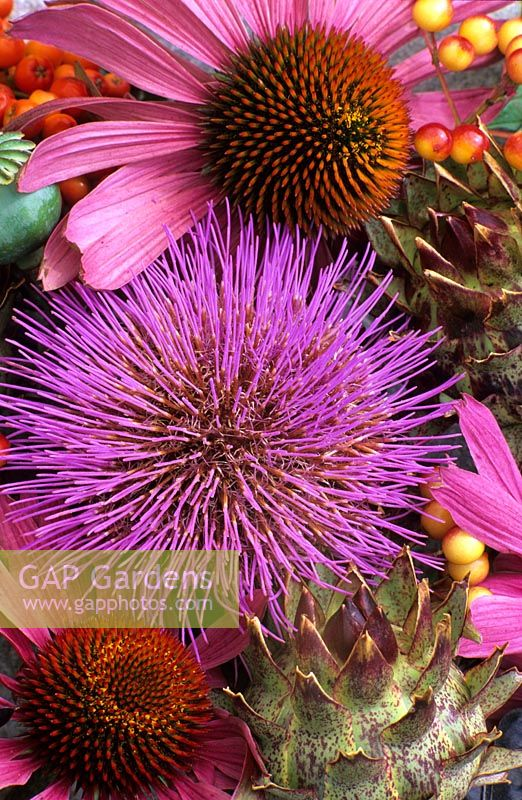Still life with flower heads - Echinacea and Cardoon