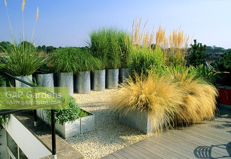 Ornamental Grasses In Containers Gap gardens metal containers with ornamental grasses on roof metal containers with ornamental grasses on roof garden workwithnaturefo