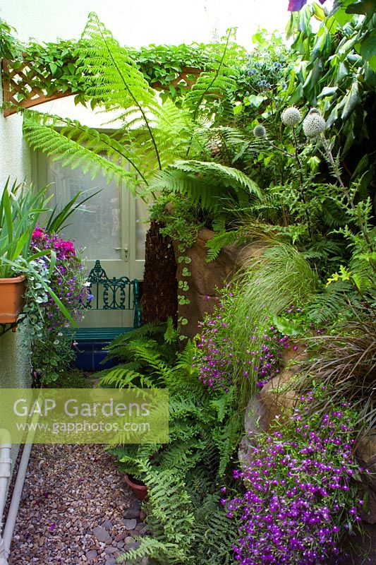 Gap gardens small town garden in bristol narrow side for Small narrow trees for gardens