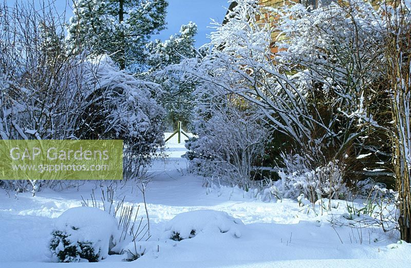 Gap Gardens Cottage Garden In Winter With Snow Gowan