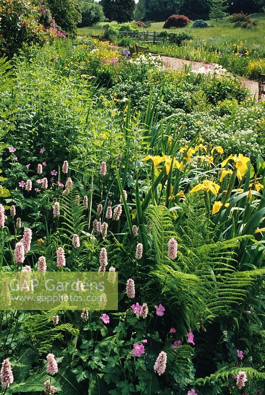 Bog garden with Irises, Ferns and Polygonum at RHS Wisley in Surrey.